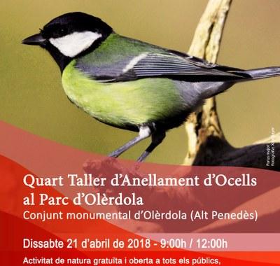 Aquest dissabte es programa el Quart Taller d'Anellament d'Ocells al Parc d'Olèrdola