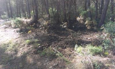 Aquest diumenge a la tarda han cremat 150m2 de vegetació forestal entre Cal Segarra i Cal Moles