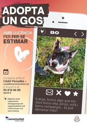 Campanya del CAAD Penedès per fomentar l'adopció de gossos