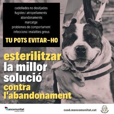Campanya per fomentar l'esterilització dels animals de companyia