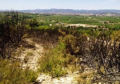 Cremen 1'5 hectàrees forestals aquesta matinada prop de Sant Pere Molanta