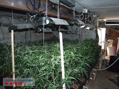Detingut a l'aeroport de Madrid el propietari d'una plantació de marihuana a Daltmar