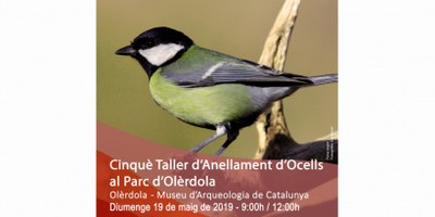 Diumenge el Parc d'Olèrdola acull un taller gratuït d'anellament d'ocells