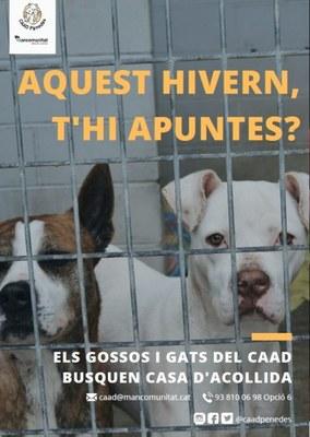 El Centre d'Acollida d'Animals Domèstics busca cases d'acollida pels seus gossos i gats