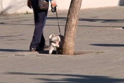 Els agents municipals realitzen una campanya per potenciar la tinença responsable d'animals