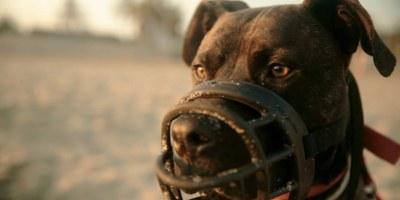 Els guàrdies municipals comproven que els propietaris reuneixen els requisits per tenir gossos potencialment perillosos
