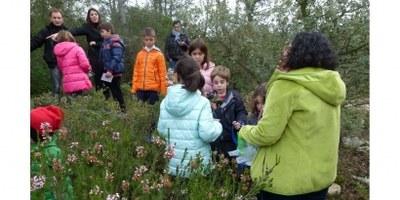Els tions arriben al bosc d'Olèrdola