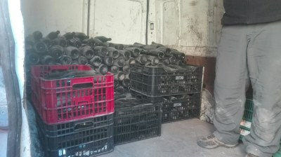 Es recullen a Sant Miquel 2.000 ampolles de cava buides dins de la Campanya de l'Ampolla
