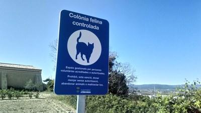 Es reprèn el servei de control de les colònies de gats i es demana col·laboració ciutadana