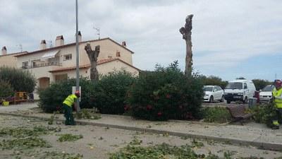 Es substituiran amb arbres d'altres espècies els pollancres talats al carrer de la Font del Cuscó