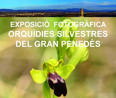 Exposició fotogràfica al Conjunt d'Olèrdola amb les orquídies silvestres del Penedès