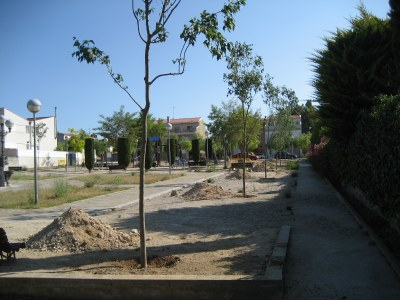 L'Ajuntament d'Olèrdola planta lledoners a la plaça Olèrdola i davant del consultori de Moja