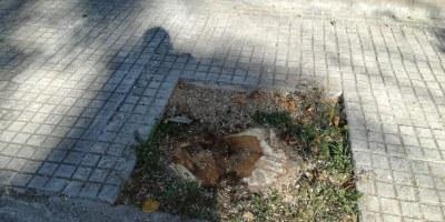 L'Ajuntament d'Olèrdola recorda que la majoria de tales d'arbres que s'han succeït al municipi han estat motivades per malalties