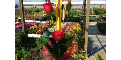 L'empresa Germinova, del polígon de Sant Pere Molanta, reparteix a domicili més de 400 roses vermelles durant aquest Sant Jordi