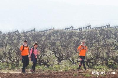Olèrdola aporta  8.900€ a La Marató de TV3 sumant els actes públics convocats per entitats