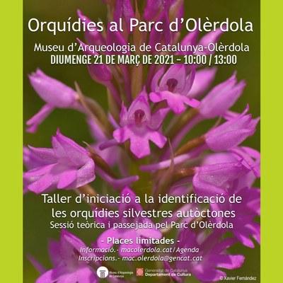 Programat aquest diumenge al matí un taller per identificar orquídies silvestres al Parc d'Olèrdola