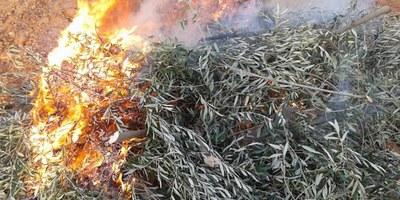 Prorrogat fins el 30 d'abril el termini per a les autoritzacions de cremes agrícoles