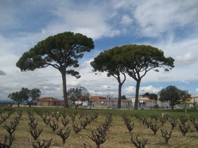 Els ters pins de Moja, un dels punts que es destaquen
