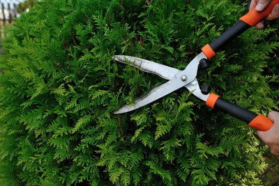 Satisfacció de CiU per la implantació d'un nou sistema de recollida de restes vegetals