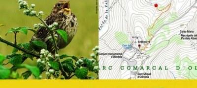 Taller d'anellament d'ocells a Olèrdola per dissabte 21 de febrer