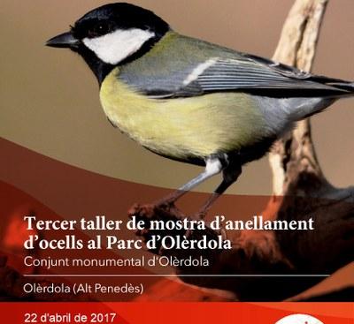 Taller d'anellament d'ocells al Parc d'Olèrdola aquest dissabte al matí