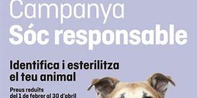 Campanyes d'esterilització d'animals de companyia