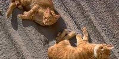 Les colònies de gats del municipi