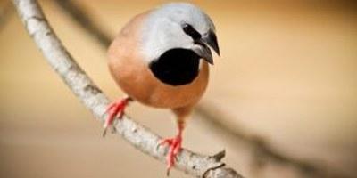 El Jardí dels Ocells