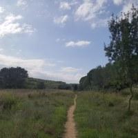 Camins d'Olèrdola