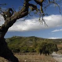Camí de Viladellops al Castell d'Olèrdola